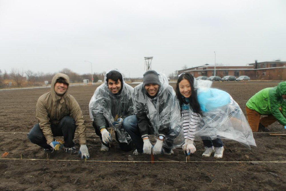 Volunteers plant beach grass at the 3.25-acre nursery at Floyd Bennett Field.