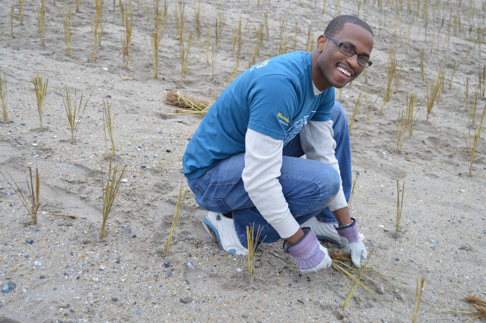 A volunteer plants beach grass on the dunes in Rockaway.