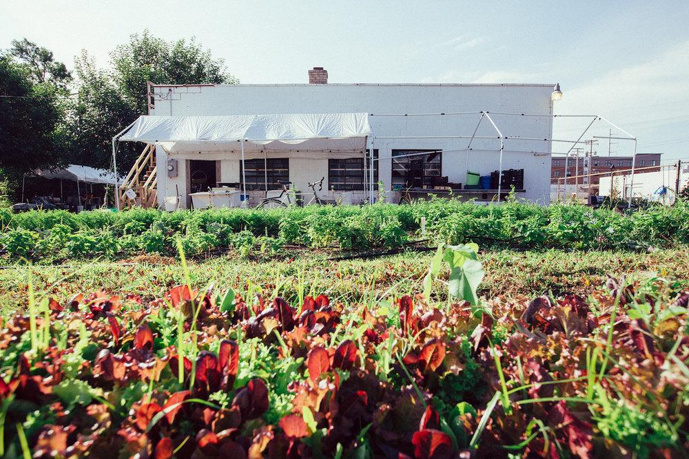Growing Lot's Urban Farm.