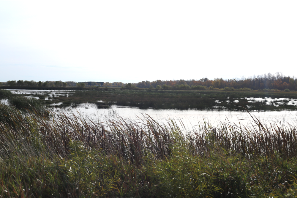 There vast surrounding wetlands help provide water to flood and irrigate the cranberry & wild rice crops, year round in addition to providing habitat for swans, geese, bears, wolves, etc.