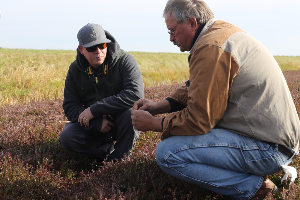 Derrick with Randy, checking out the cranberry vines before the fields are flooded