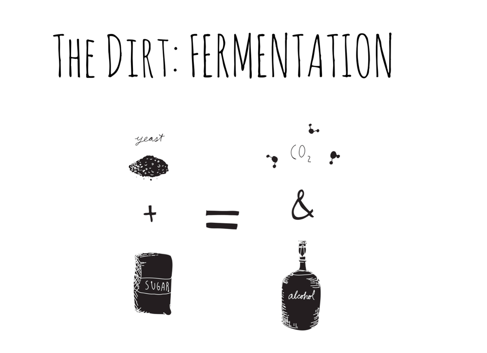 Fermentation is one of the oldest known food preservation methods. The process uses bacteria and enzymes to convert carbohydrates or sugars into alcohol and organic acids. Illustration by  Rachel Rolseth