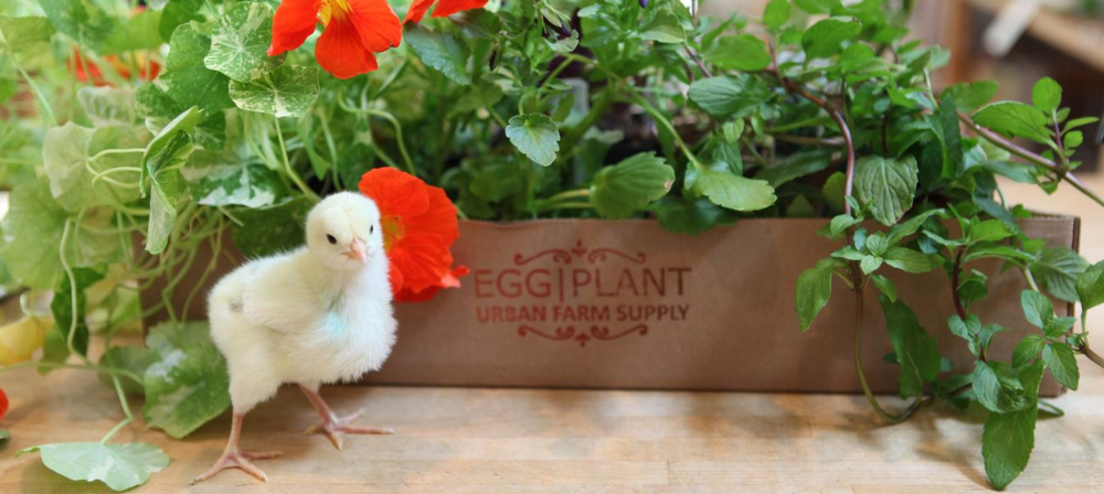 Photo Credit  Egg|Plant Urban Farm Supply