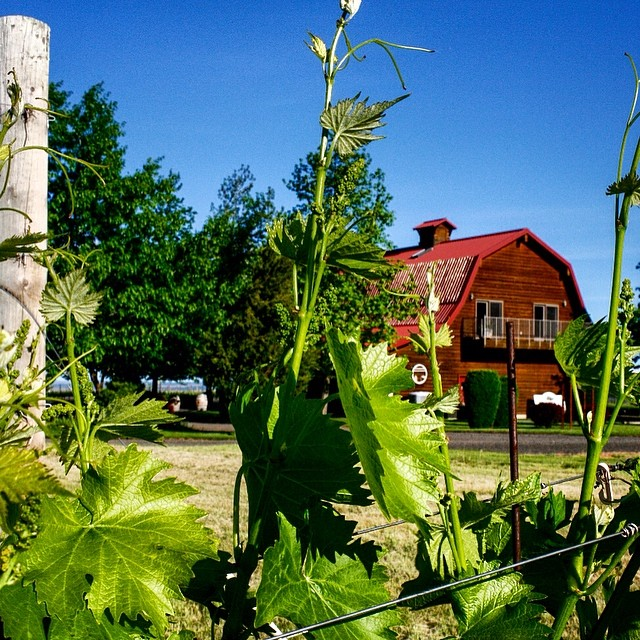 WALLA WALLA VINTNERS - Premium Reds | Character | ConsistencyOne of the state's oldest wineries, Walla Walla Vintners continues their limited production of award winning red wines. The winery, in the shadow of the Blue Mountains is one of the most picturesque in the state and worth the visit.225 Vineyard Lane, 509-525-4724, wallawallavintners.com