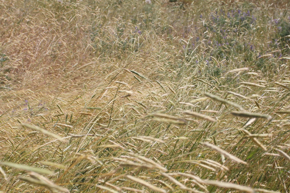 A perfect year for grasses