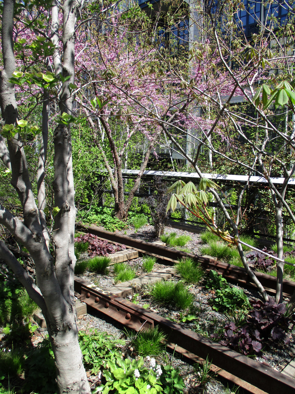 The High Line with all the Spring blossoms.