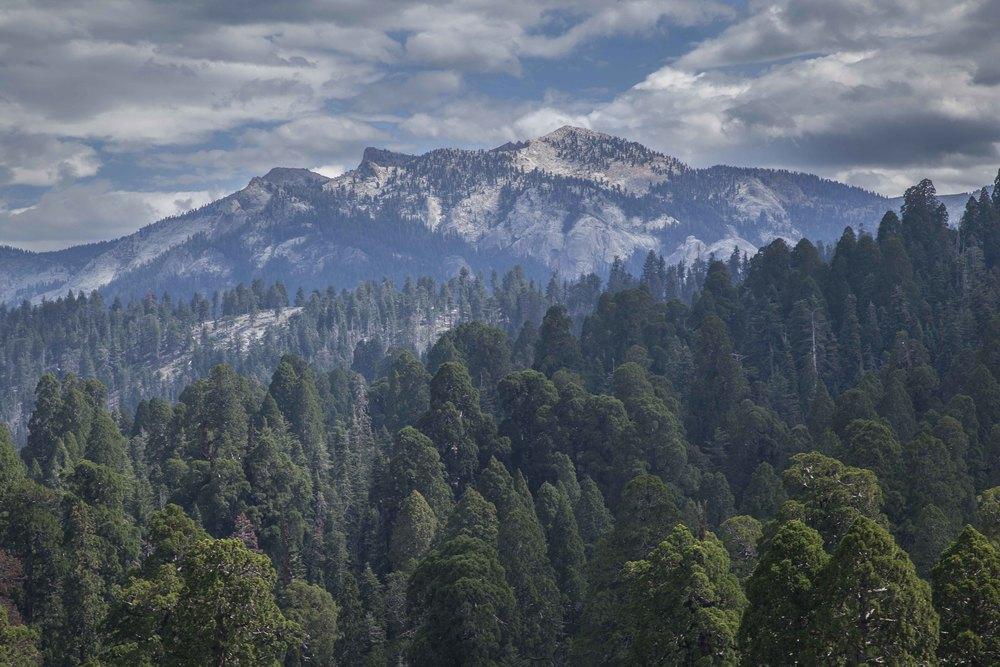Mt. Sillman and SEGI canopy2_low res.jpg