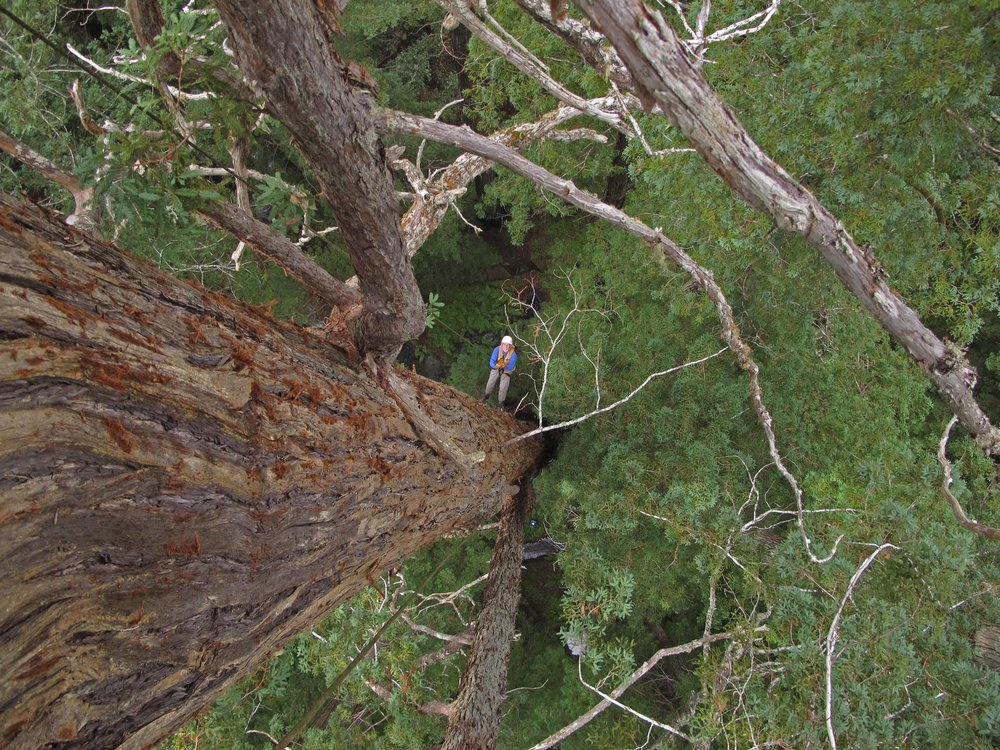 Montgomery Woods_Todd rappelling_Ambrose_low res.jpg