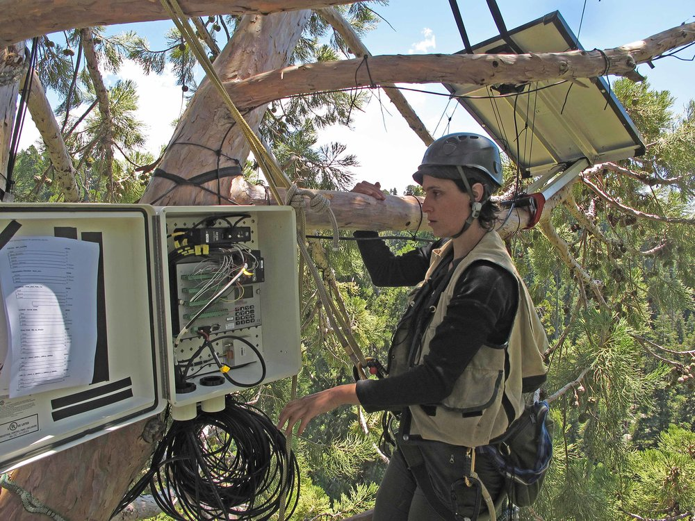 Giant Forest_Wendy with treetop datalogger and solar panel_Ambrose_low res.jpg
