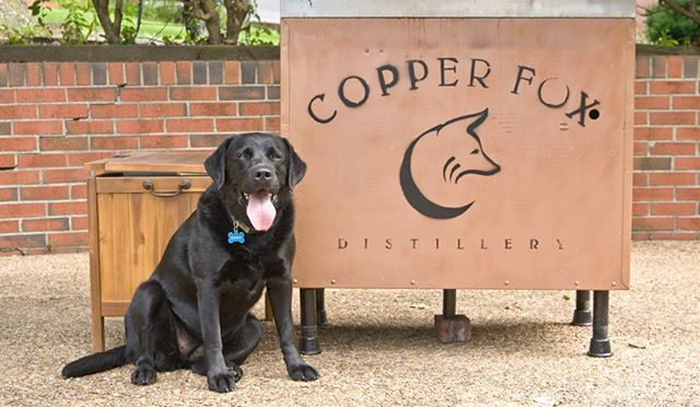 Copper Fox Distillery #DistilleryDog invites everyone to celebrate #NationalPuppyDay. Well behaved pups welcome at our distillery locations.