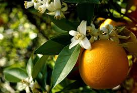orange flower.jpeg
