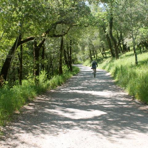 bay area bike tours