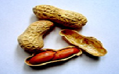 peanuts.png