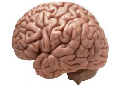 brain 2.png