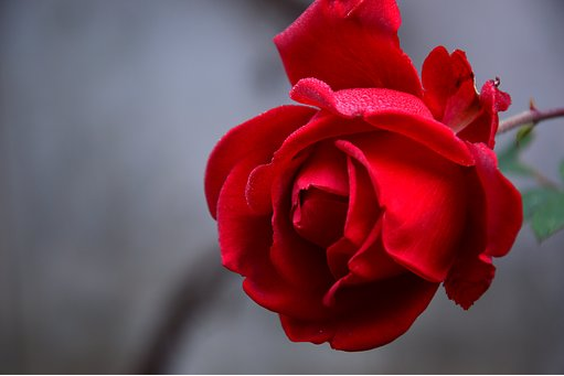 Photo couresty of pixabay