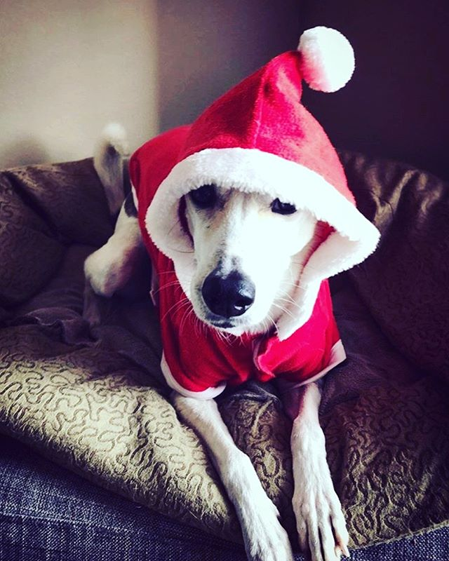 Happy Holidays from the original Dog in a Hat. Wishing you and your families a beautiful day!