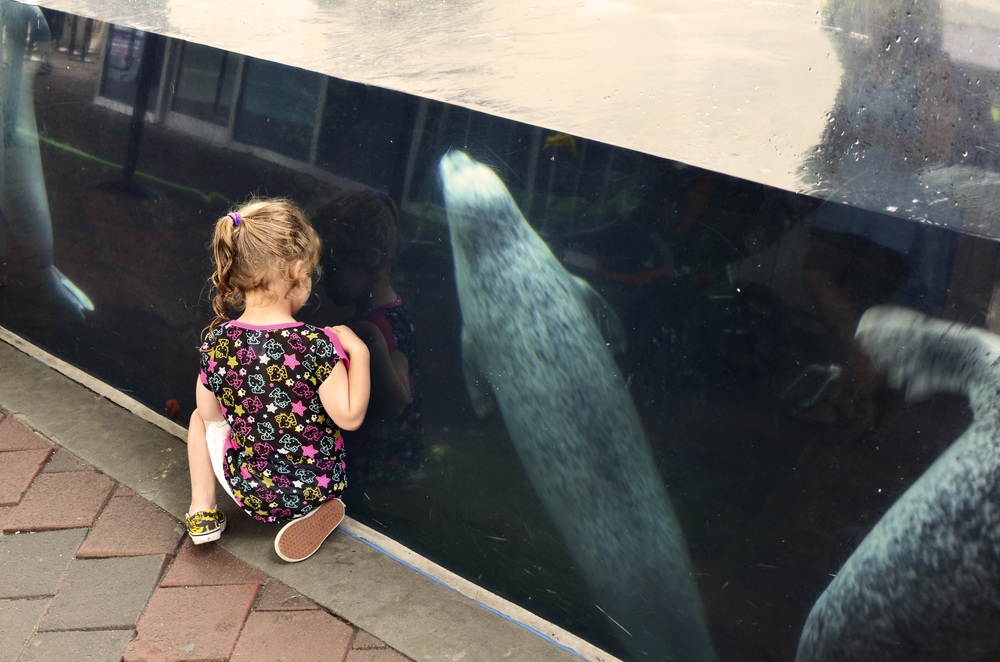 055 Girl With Seals Boston Aquarium.jpg