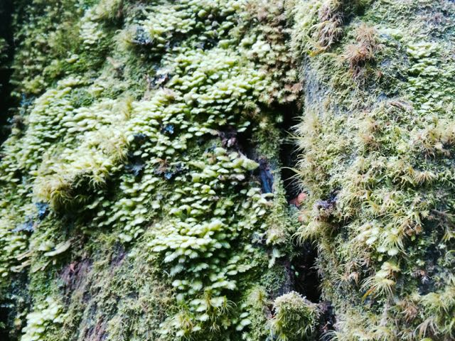 Moss Lichen 3.jpg