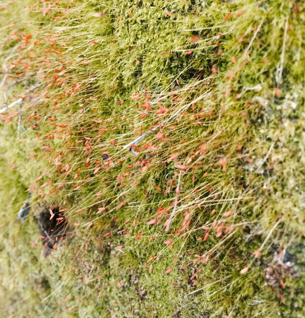 more moss.jpg