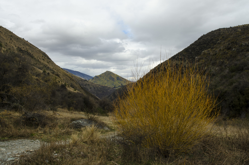 580 Arrowtown Descent.jpg