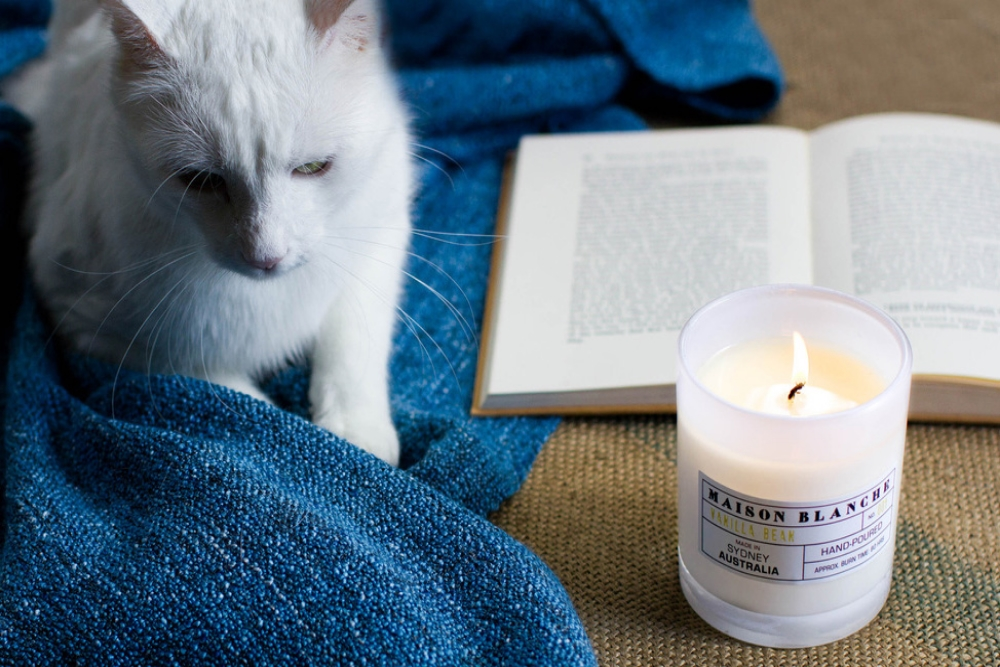Q+A / TALKING CATS & POLITICS WITH MAISON BLANCHE  We chat with Kristy Payne the fragrance guru and creator behind Australian made, hand-poured soy candles- Maison Blanche about cats, politics and of course candles.
