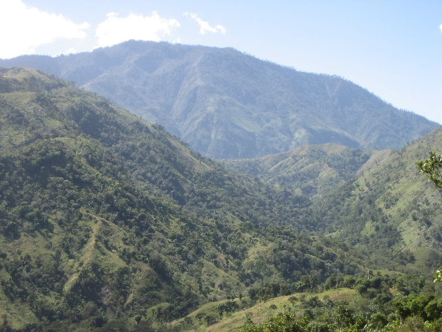 THE COFFEE ORCHARDS OF GRAND-ANSE, HAITI, WITH PIC MAYA IN THE BACKGROUND