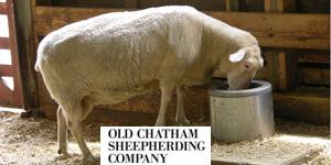 chatham sheep d.jpg