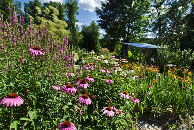 Gardensa.jpg