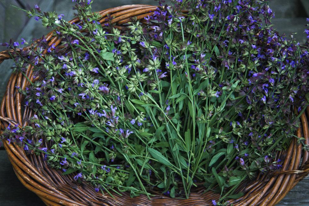 sage flowers.jpg