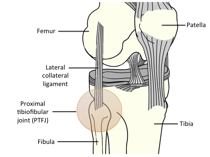 Image 1: View of the right knee from the front/side showing the femur, tibia, fibula and patella.