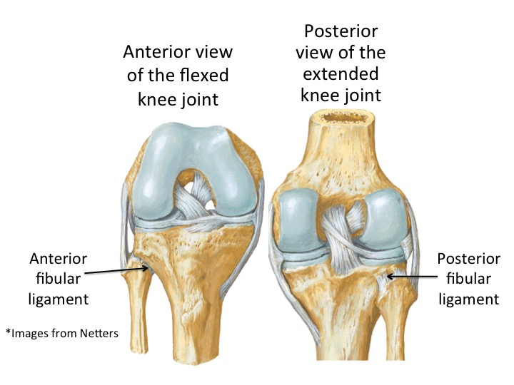 Image 2: Anterior and posterior views of the knee showing the fibular ligaments.