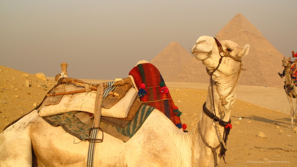 Camel taxi at your service!