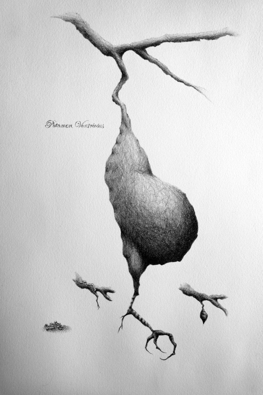 Putamen detail - lithograph