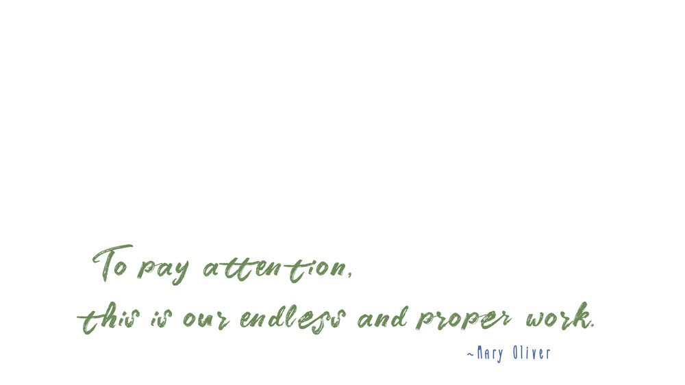 sat.MOquote1.pay attention-1.jpg