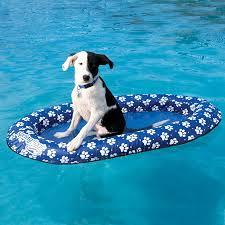 dog float.jpg
