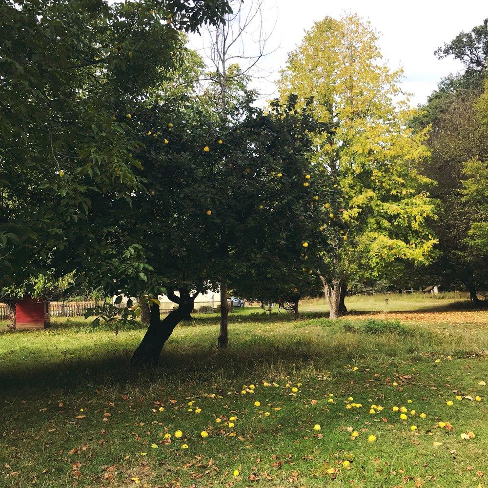 Favoritepark in Ludwigsburg.