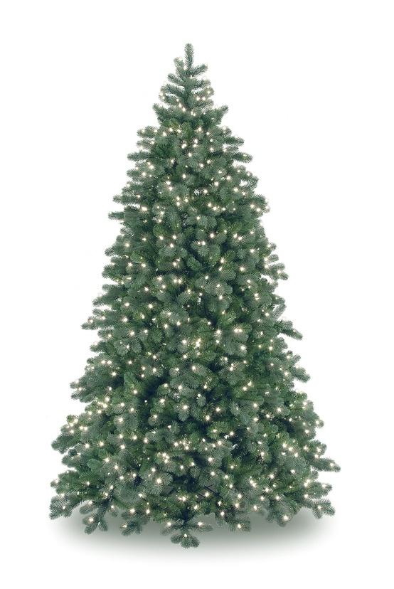 real christmas trees lots near me