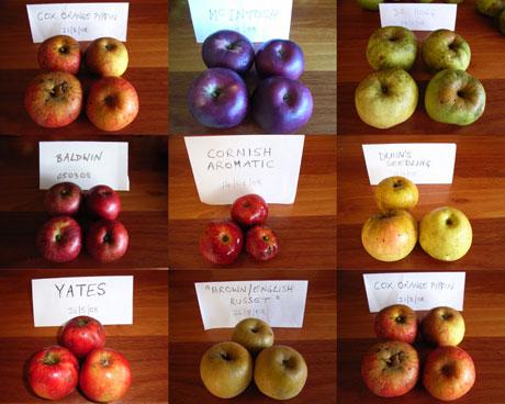Heritage-Apples