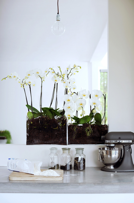 Modern_Phalaenopsis_white_home orchids