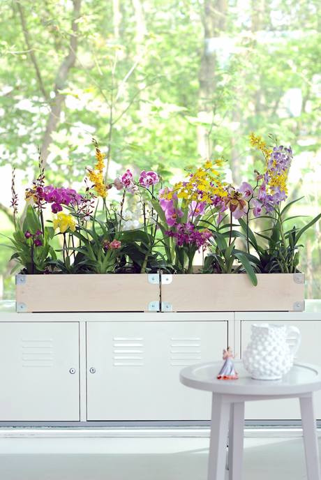 Modern_various-orchids_cheerful orchids