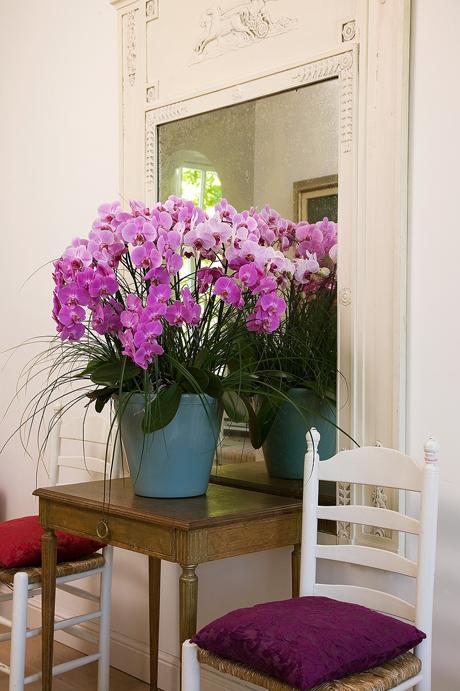 SB_Thuis_Klassiek_Phalaenopsis_Lila_paars Orchid