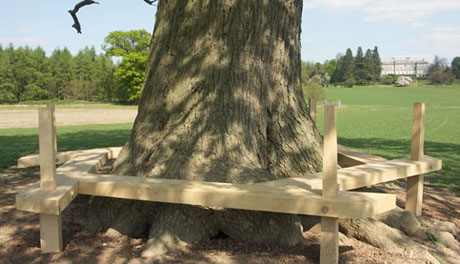 Timber tree seat by Andrew Trotman