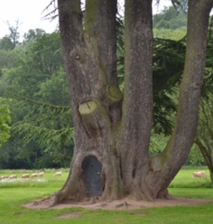 TreeDoor