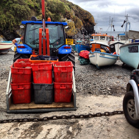 cadgwith-lobster-fishing