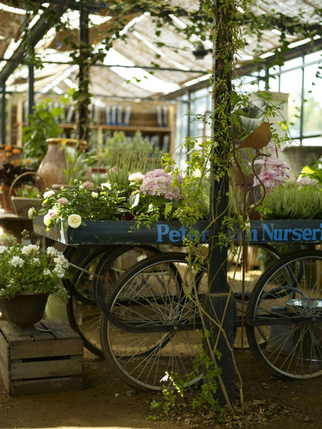 credit-to-david-loftus-Petersham-Nurseries