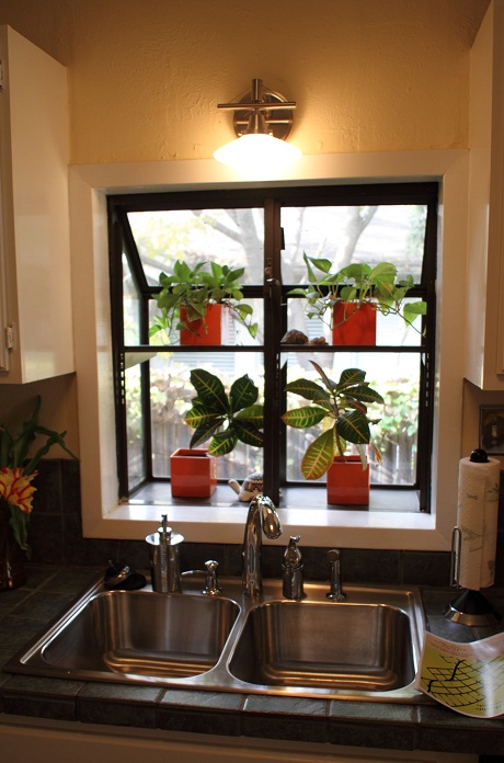 kitchen sill plants