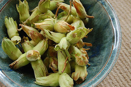kentish-cob-nuts