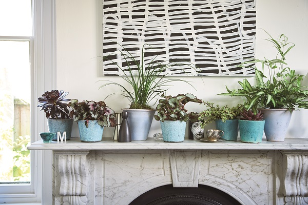 Placing single plants in separate pots makes it easy to rearrange a display.