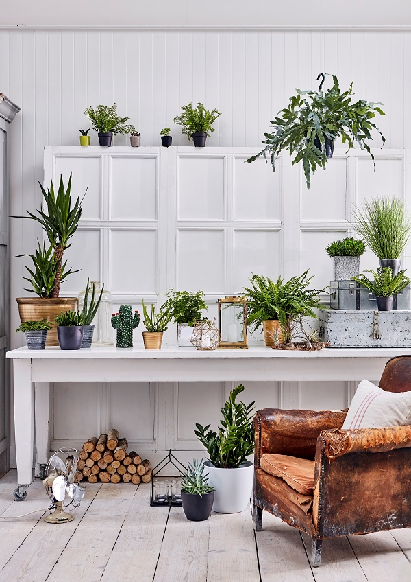 Foliage from £4.99, Succulents from £1.99, Houseplant Pots from £5.99, Cactus Vase £16.99, Gold Geometric Lantern £7.99, Small Gold Metal Lantern £19.99, Greenhouse Candle Holder £16.99
