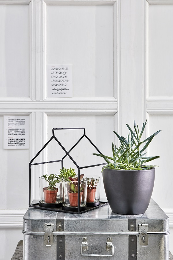 Green Tea Light Holder £16.99, 6cm Succulents from £1.99, 15cm Succulents from £4.99, Matt Black Planter £6.99